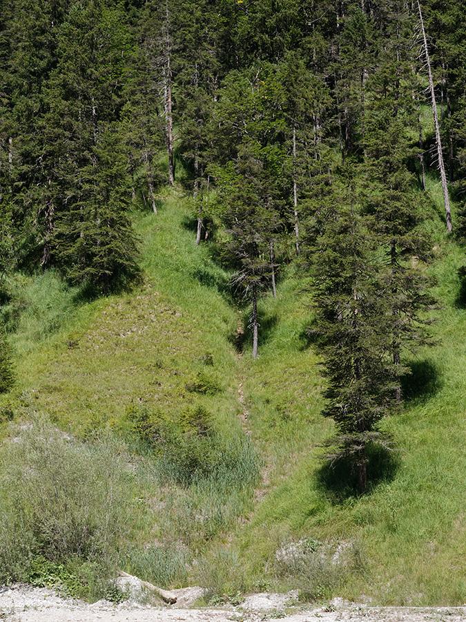 Cordulegaster bidentata, habitat