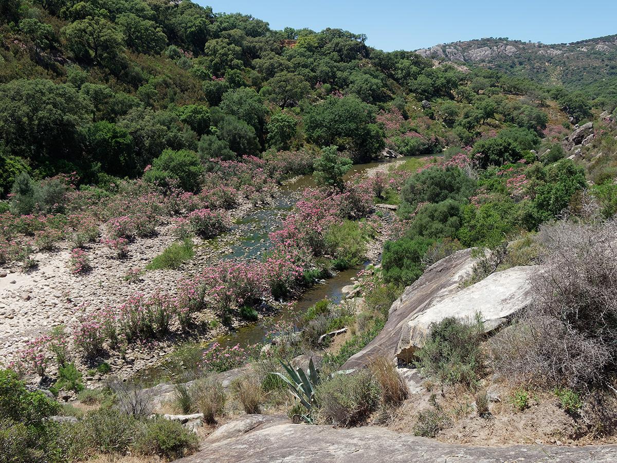 Paragomphus genei, habitat