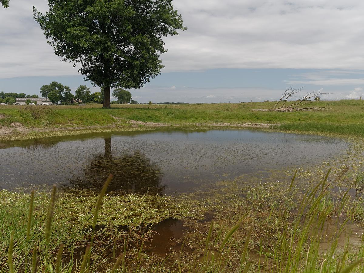 Coenagrion scitulum, habitat